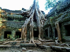 Ta Prohm (Simple Dolphin) Tags: trees tree rock ruins rocks cambodia khmer ruin roots mysterious root angkor taprohm tombraider