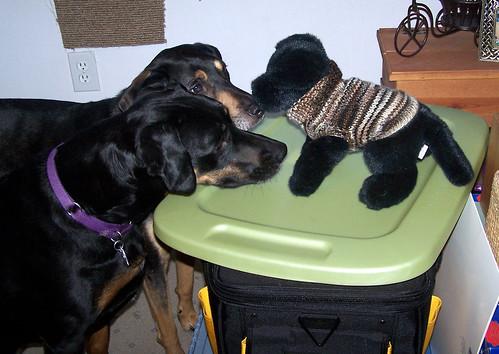 dogsweaterLolaTut2