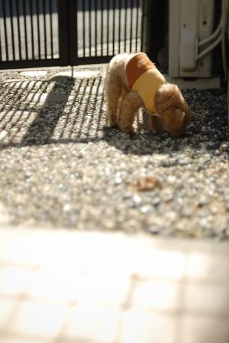ChuChu, warm spring sun