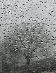 Rainy window, rainy tree