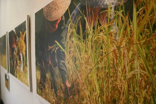 Sticky Rice photo exhibition. Louang Prabang.