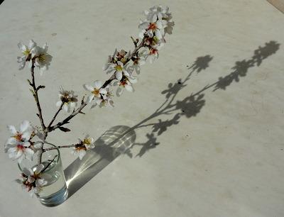 florsvas