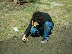 Multi-tasking (Beth Lemon) Tags: house garden etsy larvae