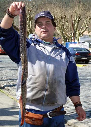 Vendedor de lampreas