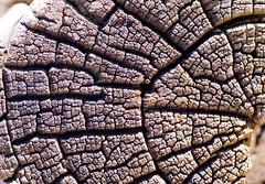 Logs End (FrAntknee) Tags: hdr artizen