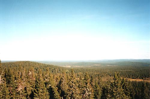 Finnland Waldregion