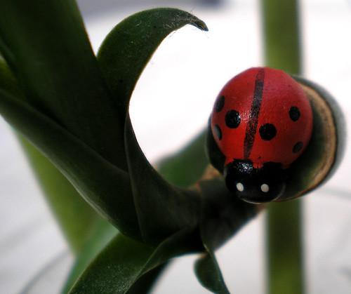 joaninha | ladybug