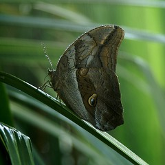 Butterfly taking a shower #3 (ame@muc) Tags: plant green butterfly germany munich shower europe butterflies h2o tropical waterdrops botanicalgarden impressedbeauty