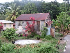 The chicken house of Dominica