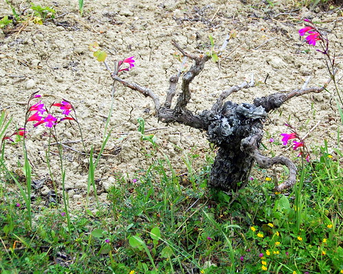 Vine With Wildflowers