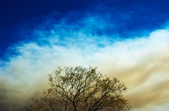 Smoke to the East (lulu.photo) Tags: california tree fire losangeles nikon smoke d70s brushfire hollywoodhills luluphoto