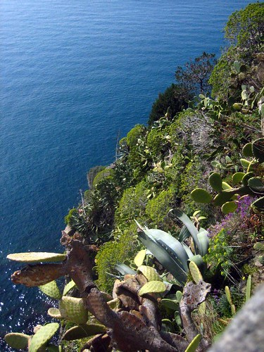 View from Corniglia's overlook