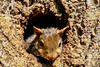 (mightyquinninwky) Tags: baby tree home squirrels infant nest kentucky orphans bark trunk lexingtonky knothole chevychase fontaineroad centralkentucky weened