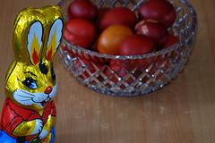 Scheming rabbit (Handles) Tags: rabbit bunny easter greek smash chocolate evil tradition scheming pagan goodluck greekorthodox hardboiledeggs wabbit paintedeggs eggbattle