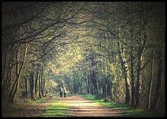 (andrewlee1967) Tags: couple trees staffordshire rudyardlake andrewlee1967 uk aplusphoto superaplus canon400d england landscape focusman5 andrewlee