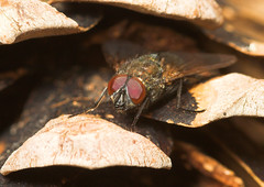 "A Fly hiding in a Pine Cone • <a style=""font-size:0.8em;"" href=""http://www.flickr.com/photos/57024565@N00/457666199/"" target=""_blank"">View on Flickr</a>"