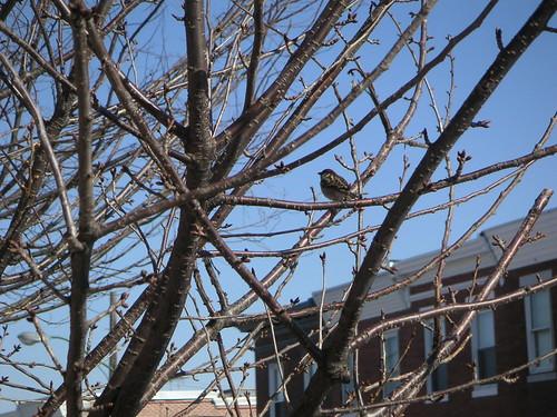 BirdTreeBrewers