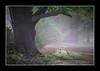 Peper Harow..21 April 2007 (strussler) Tags: trees england field canon eos searchthebest sigma surrey 5d rabbits eyeofthebeholder supershot peperharow colorphotoaward picswithframes impressedbeauty irresistiblebeauty wowiekazowie diamondclassphotographer flickrdiamond strussler