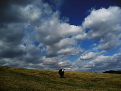 Stranded Under Endless Sky (hchorey) Tags: sky landscape virginia cow lexington endless cherryhillfarm chorey