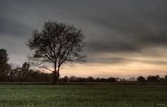 Nostalgic Melancholy (Gert van Duinen) Tags: old sunset tree contrast landscape digitalart silhouettes nostalgic melancholy landschaft arbre landschap pensiveness thoughtfulness dutchartist flickrsbest anawesomeshot landschaftsaufnahme treesubject diamondclassphotographer flickrdiamond gertvanduinen