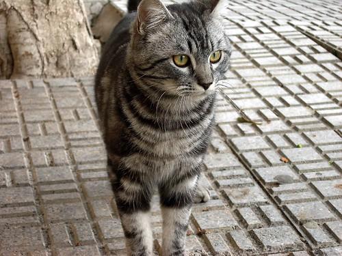 gato perdido 2