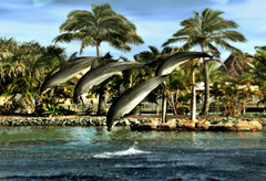 """And I said to myself. """"What a beautiful world"""". (chatallot) Tags: motion speed wonder searchthebest dolphins mystical showtime splash capture leap outofwater beautifulworld highflying outstandingshots anawesomeshot aplusphoto"""