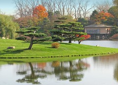 Fall at the Japanese Garden (Cher12861 (Cheryl Kelly on ipernity)) Tags: chicagobotanicgarden japanesegarden landscape pond water reflections autumn fall trees teahouse color editedtoaddcolortothesky