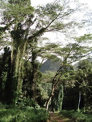 A View from the Trail 5 (aggiegogo) Tags: water hawaii sand waves oahu hiking surfing waterfalls agathe rentalcar sandybeach makapuubeach manoafalls kailuabeach eastoahu sharack waimanolobeach