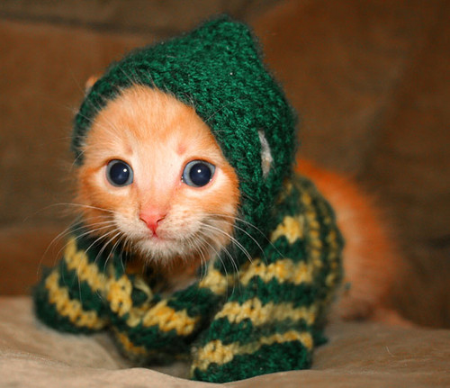 knitted_kitteh