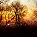 Cedar Lane Sunrise - Nashville, Tennessee