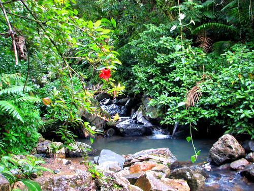 El Yunque rain forest, Sierra Luquillo, Puerto Rico