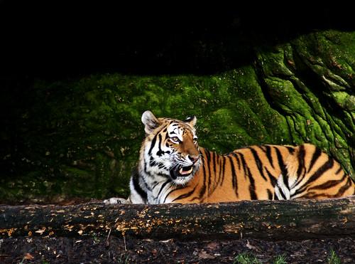 Tierpark15