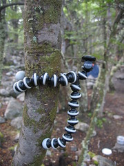 GorillaPod wrapped around tree