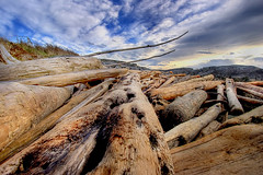 Driftwood and Sky (DARREN ST0NE) Tags: sky canada color 20d clouds canon eos interesting bc britishcolumbia wideangle victoria explore driftwood multiple photoshopcs hdr orton exposures photomatix explored p1f1 anawesomeshot darrenstone lightgazer
