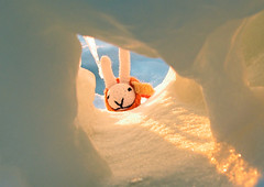 Hello down there! (kozyndan) Tags: cold ice water japan walking hokkaido shiretoko utoro bunnyfish driftice seaofohkotsk ohkotsk