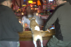 Dog in a Bar