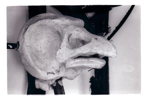 Bird skull.