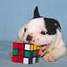 子犬:Uros Petrovic - Genius