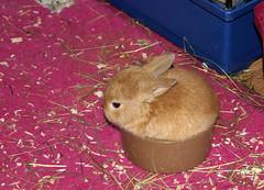 Getting bigger :) (Sjaek) Tags: pet cute rabbit bunny sony adorable fluffy alpha dslr impressedbeauty