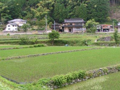 paysage japonais campagne (3)