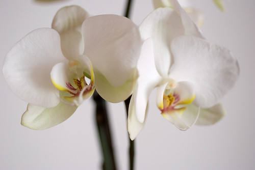 Orchids II