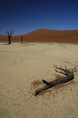 Naturaleza muerta - Dead Vlei (elosoenpersona) Tags: namibia namib deadvlei namibnaukluft elosoenpersona