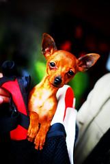 pop-up pup - by lightbrigade