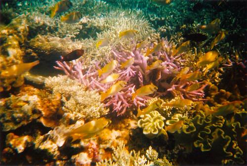 珊瑚礁 │ 動物 │ 無料写真素材