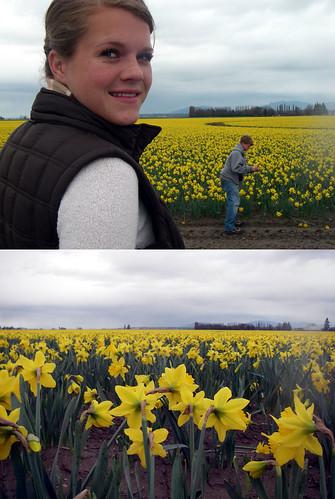 La Conner Daffodils