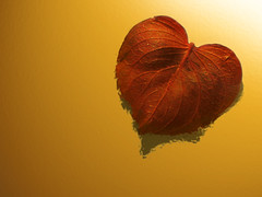 Falling in love... (Marcus Zorbis) Tags: red love yellow leaf heart amor dry vermelho amarelo giallo corao folha rosso cuore amore superbmasterpiece eneidasbirthday