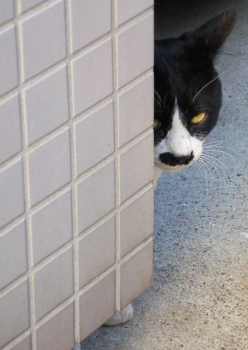 Spying?
