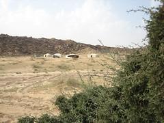 (saudi_sky) Tags: camp tree sex desert dune tent adventure saudi riyadh wadi             dahna