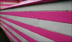 Pink & White.. What a Delight.. (Cherishlovespink) Tags: pink white abigfave pinkalicious cherishlovespink aplusphoto
