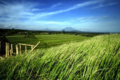Jatiluwih (Farl) Tags: travel sky bali mountains colors indonesia rice farm quality terraces agriculture sawah jatiluwih tabanan specnature